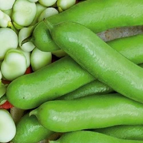 fèves légumes