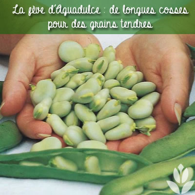 feves d'aguadulce