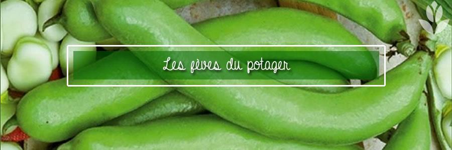 fèves du potager