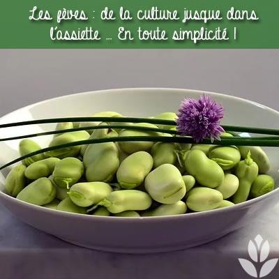 fèves de la culture jusque dans l'assiette