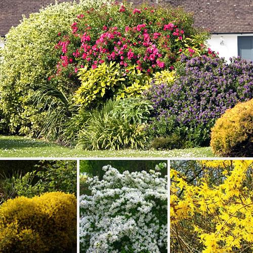 réaliser un massif d'arbustes