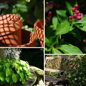 la gestion de l'ombre dans le jardin