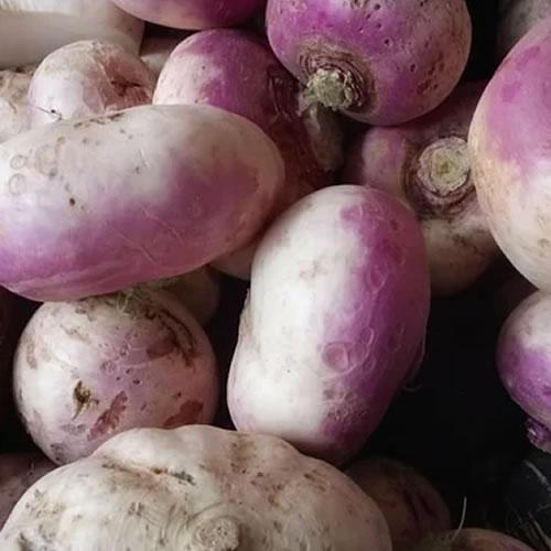 navets du potager