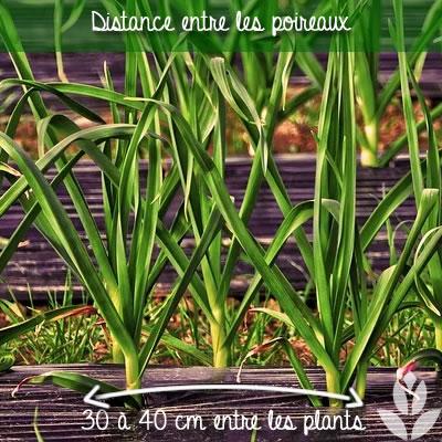 distance de plantation entre les poireaux