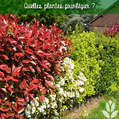 quelles plantes prvilégier pour la réalisation d'un massif d'arbustes ?