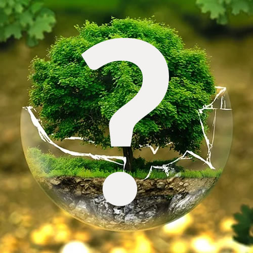tout savoir sur les arbres et arbustes