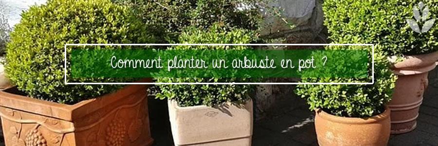 comment planter un arbuste en pot ?