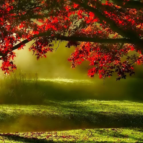 arbustes d'ombrage