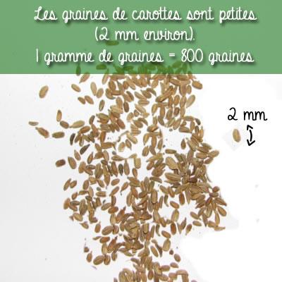 800 graines dans un sachet d'un gramme de graines de carottes