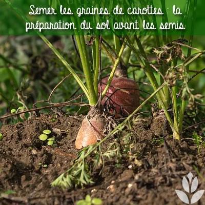 préparation du sol avant les semis de carottes