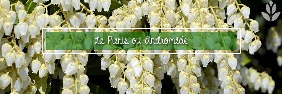 pieris andromede