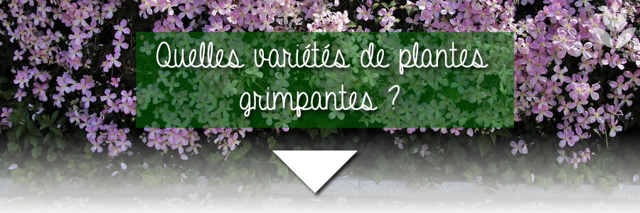 quelles variétés de plantes grimpantes choisir ?