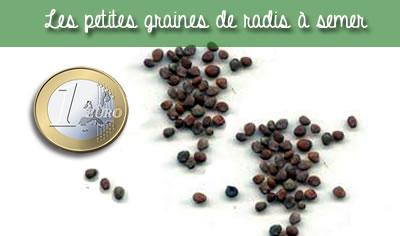 taille des graines de radis