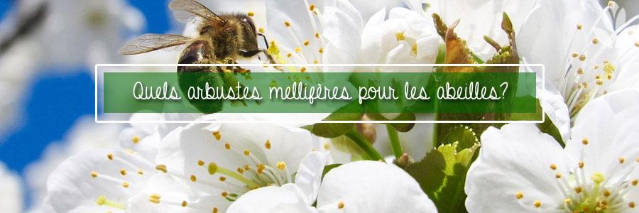 quels arbustes pour les abeilles?