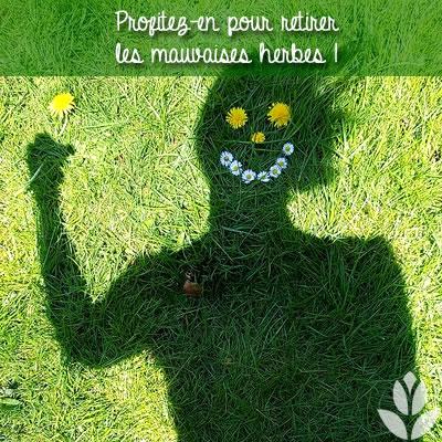 retirez les mauvaises herbes