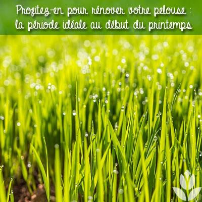 renover pelouse