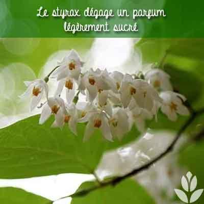 styrax parfum