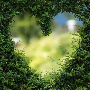 Au coeur de votre jardin