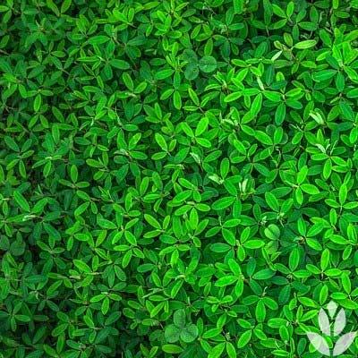 le thème jardin sélectionné par les jardiniers Willemse