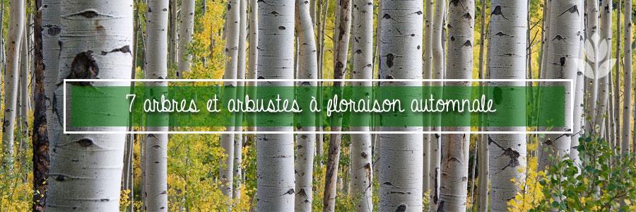 arbres et arbustes à floraison automnale