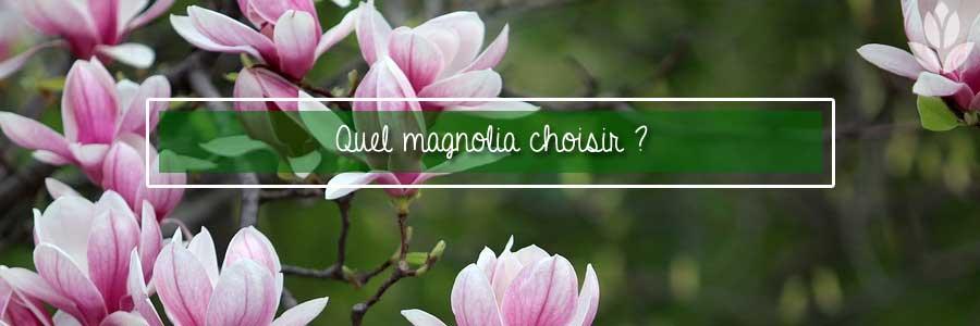 quel magnolia choisir pour le jardin?