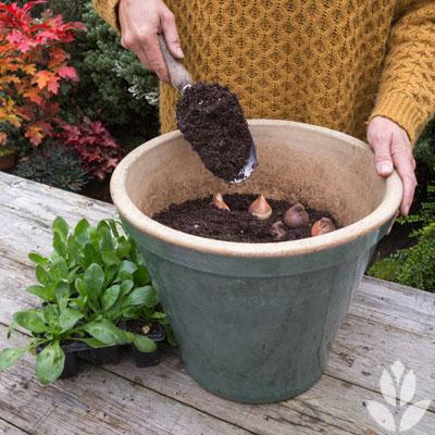 Comment s'y prendre pour planter les bulbes en lasagnes ?
