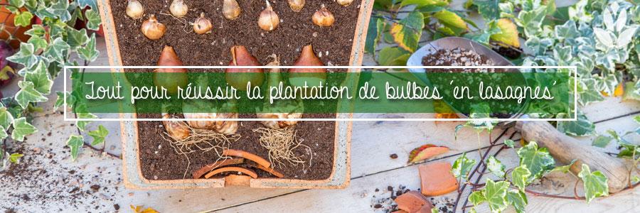 Conseils et astuces pour réussir la plantation de bulbes 'en lasagnes'