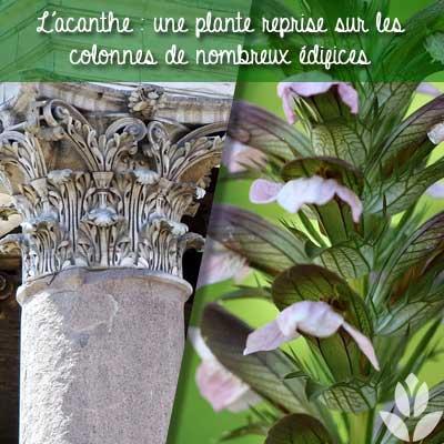 acanthe colonne