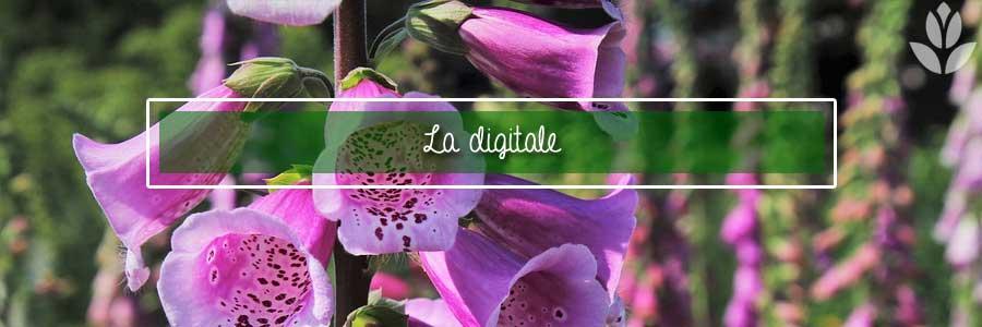 digitale digitalis