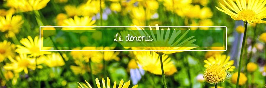 doronic doronicum