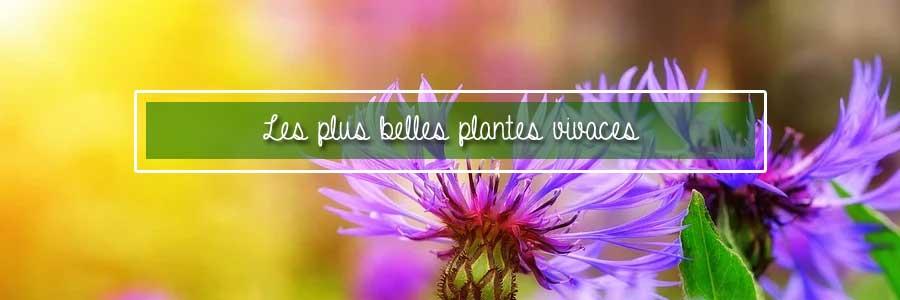 les plus belles plantes vivaces