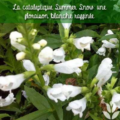 cataleptique summer snow
