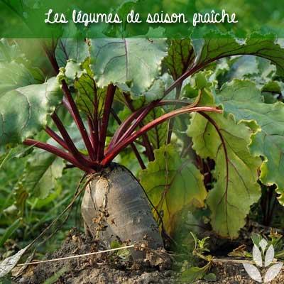 légume de saison fraîche du potager
