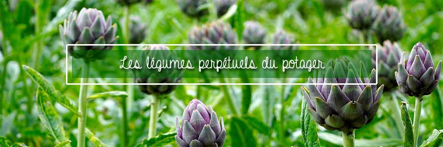 légumes perpétuels du potager