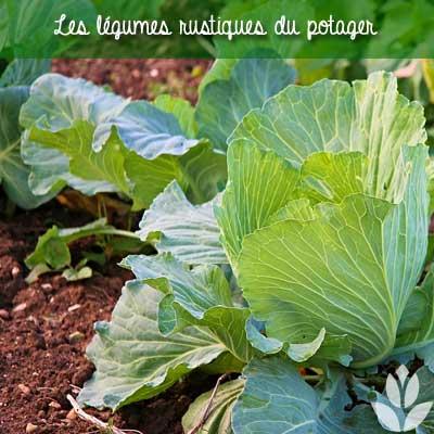 légumes rustiques du potager