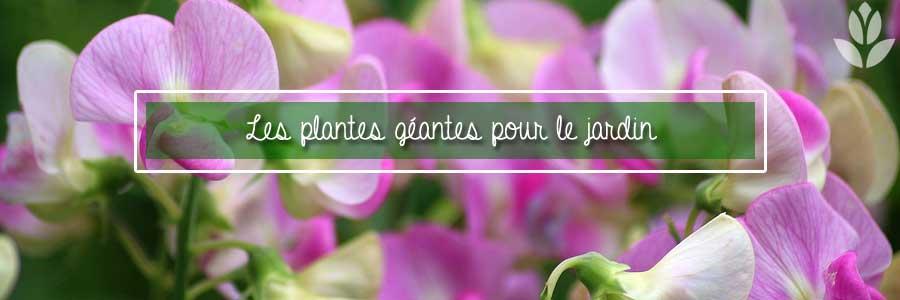 plantes géantes pour le jardin