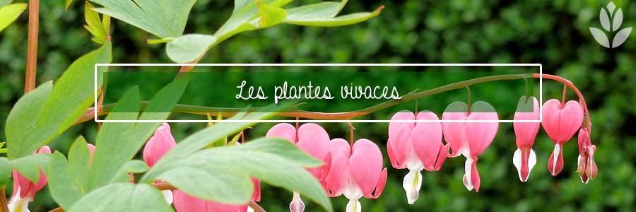tout savoir sur les plantes vivaces
