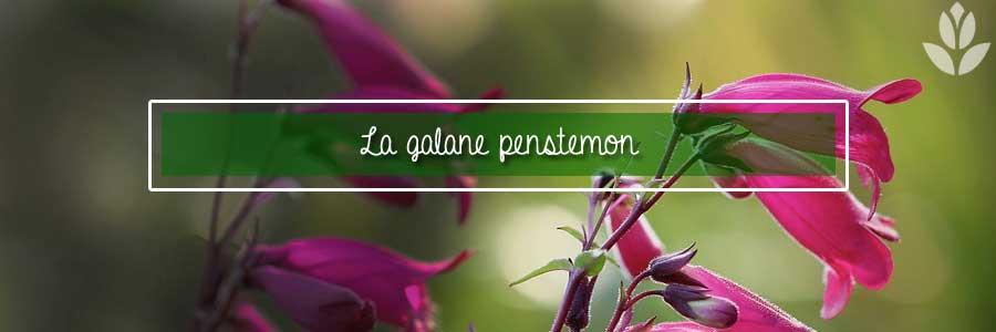 galane