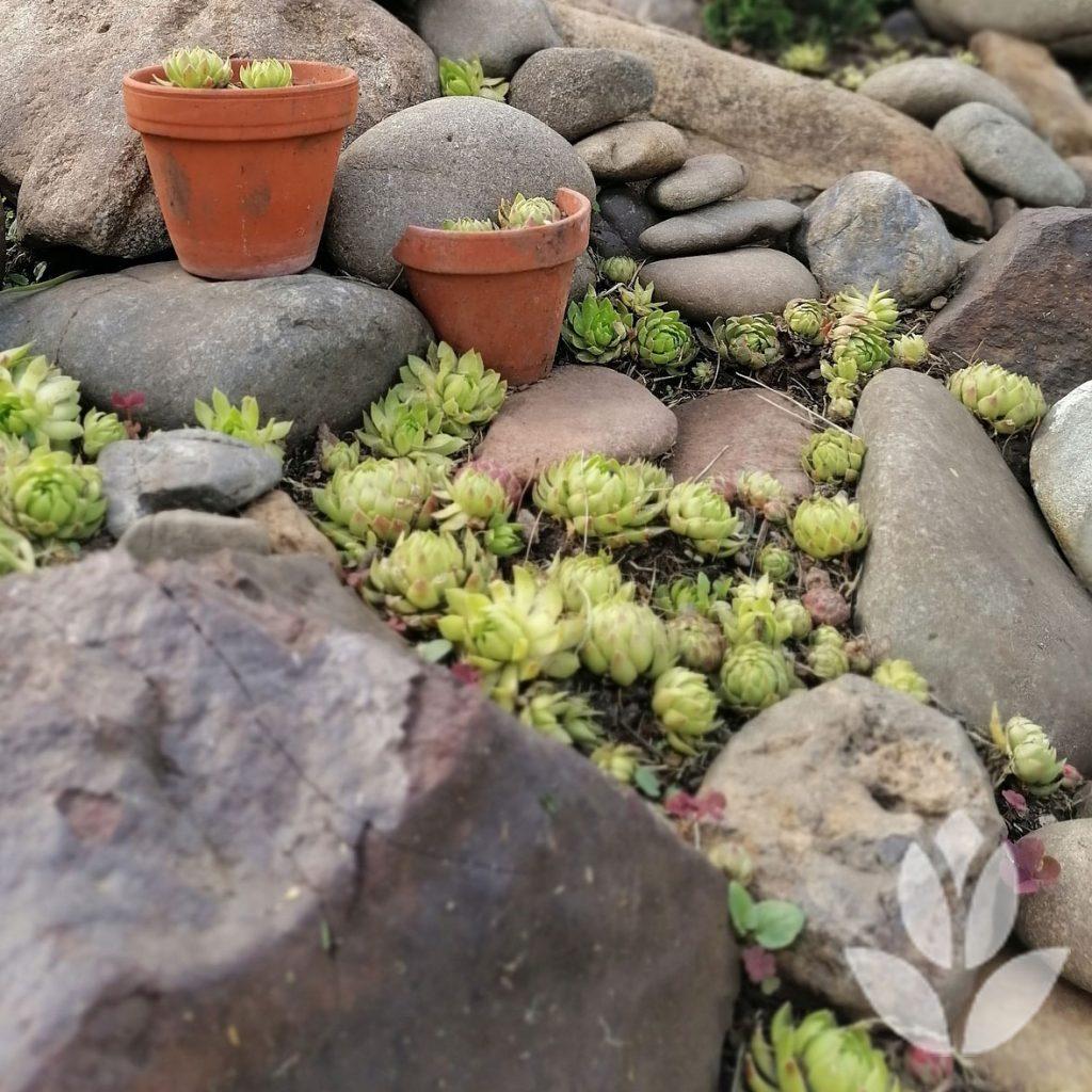 jardin de rocaille