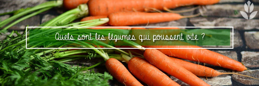 légumes qui poussent vite