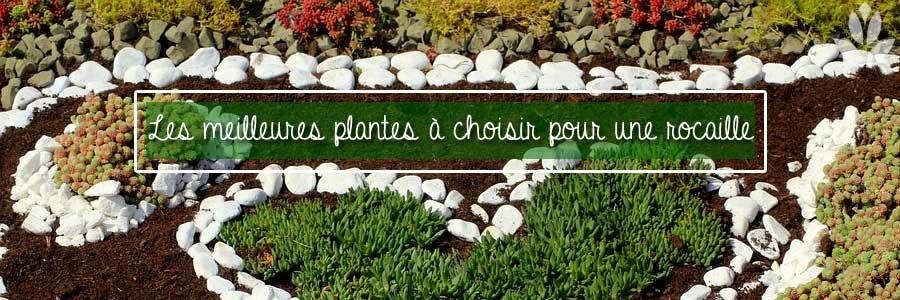les meilleures plantes de rocailles à choisir