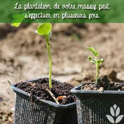 plantation en plusieurs fois