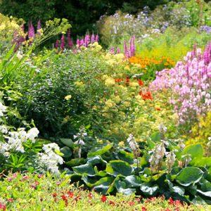 Réaliser un massif de plantes au jardin