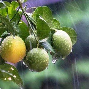 comment choisir un arbre fruitier?