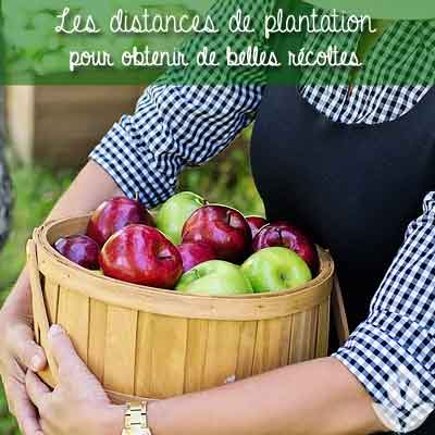 distance fruitiers plantations
