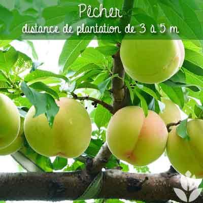 pâcher distance de plantation