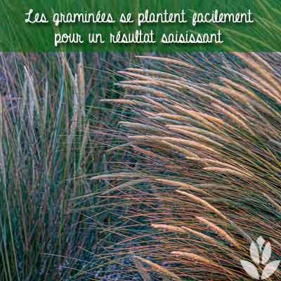 plantation facile des graminées