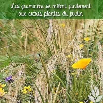 graminées plantes du jardin