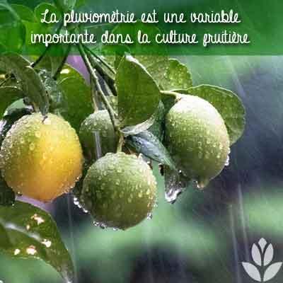 pluvimètrie et culture fruitière