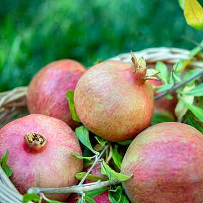 fruits-grenade-dans-panier